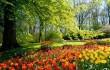 slike-prirode-u-proljece