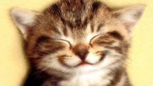 maca se smije